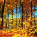 Tu Bishvat, El Año Nuevo de los Árboles y la Presencia Divina